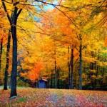 fall-equinox-cosmic-events
